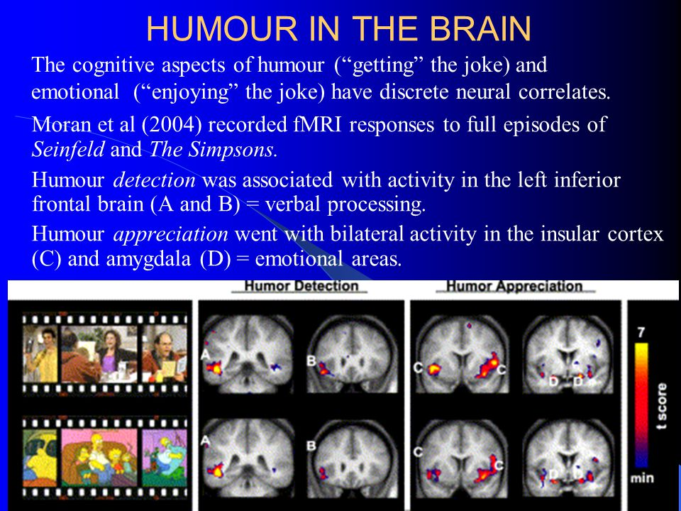 HUMOUR IN THE BRAIN Moran et al (2004) recorded fMRI responses to full episodes of Seinfeld and The Simpsons.