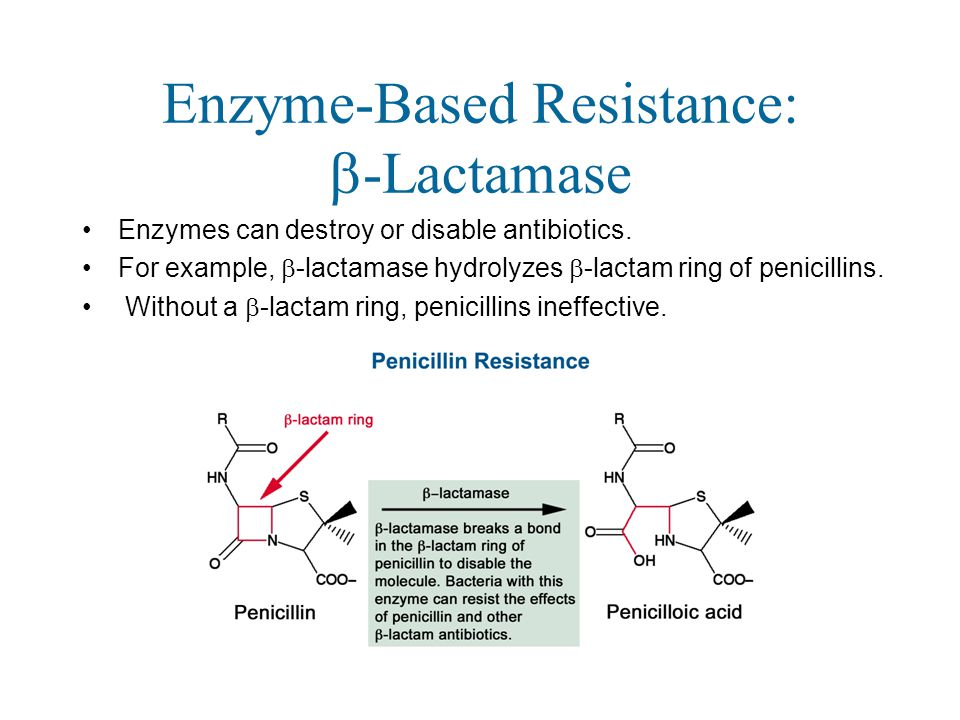 Enzyme-Based Resistance:  -Lactamase Enzymes can destroy or disable antibiotics.