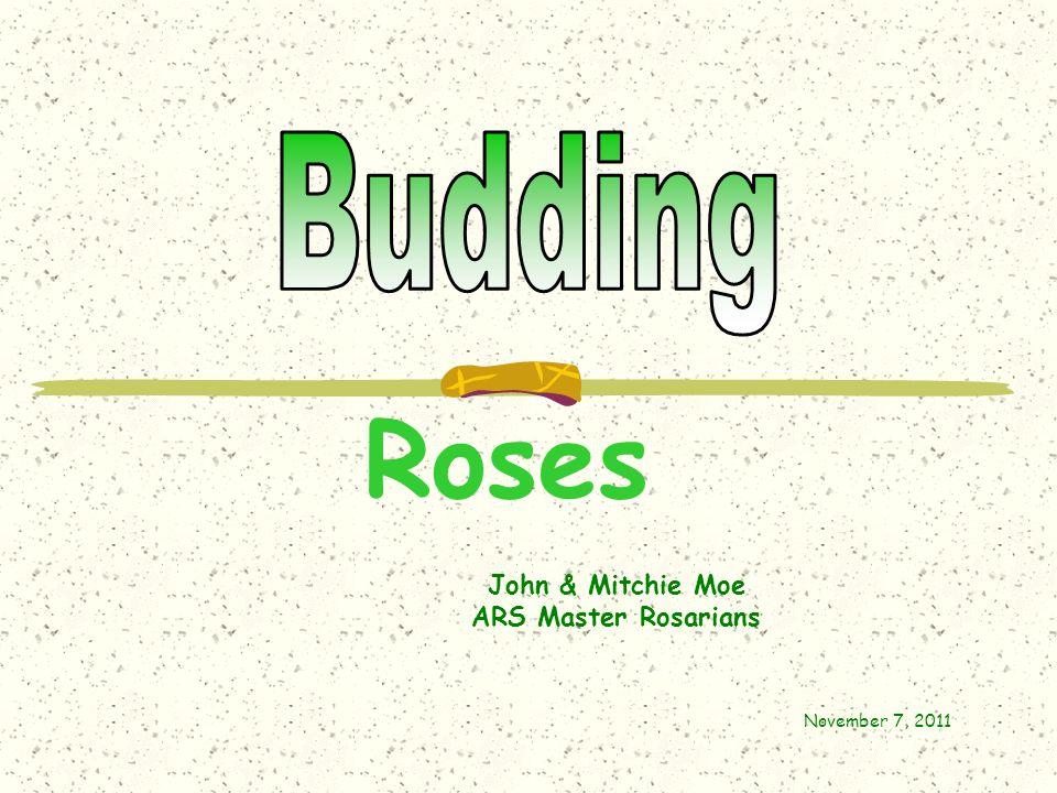Roses John & Mitchie Moe ARS Master Rosarians November 7, 2011