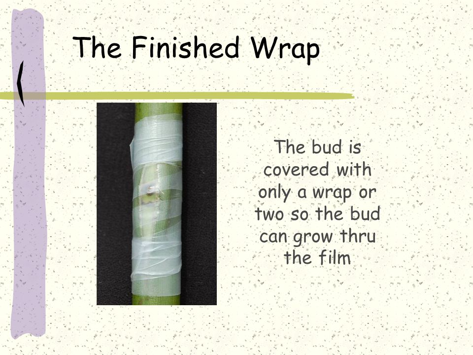 The Finished Wrap The bud is covered with only a wrap or two so the bud can grow thru the film