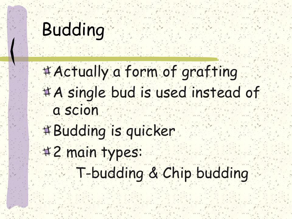 Budding Actually a form of grafting A single bud is used instead of a scion Budding is quicker 2 main types: T-budding & Chip budding