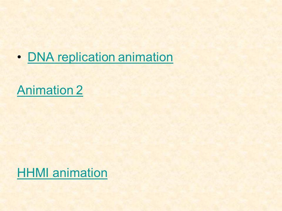 DNA replication animation Animation 2 HHMI animation