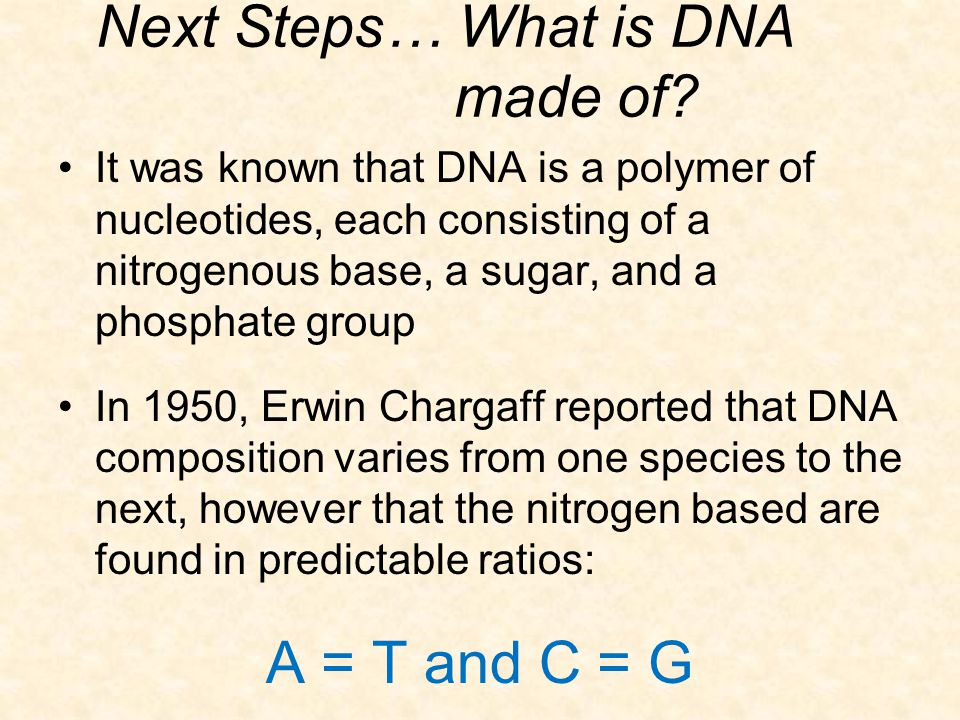 Next Steps… What is DNA made of? It was known that DNA is a polymer of nucleotides, each consisting of a nitrogenous base, a sugar, and a phosphate gr