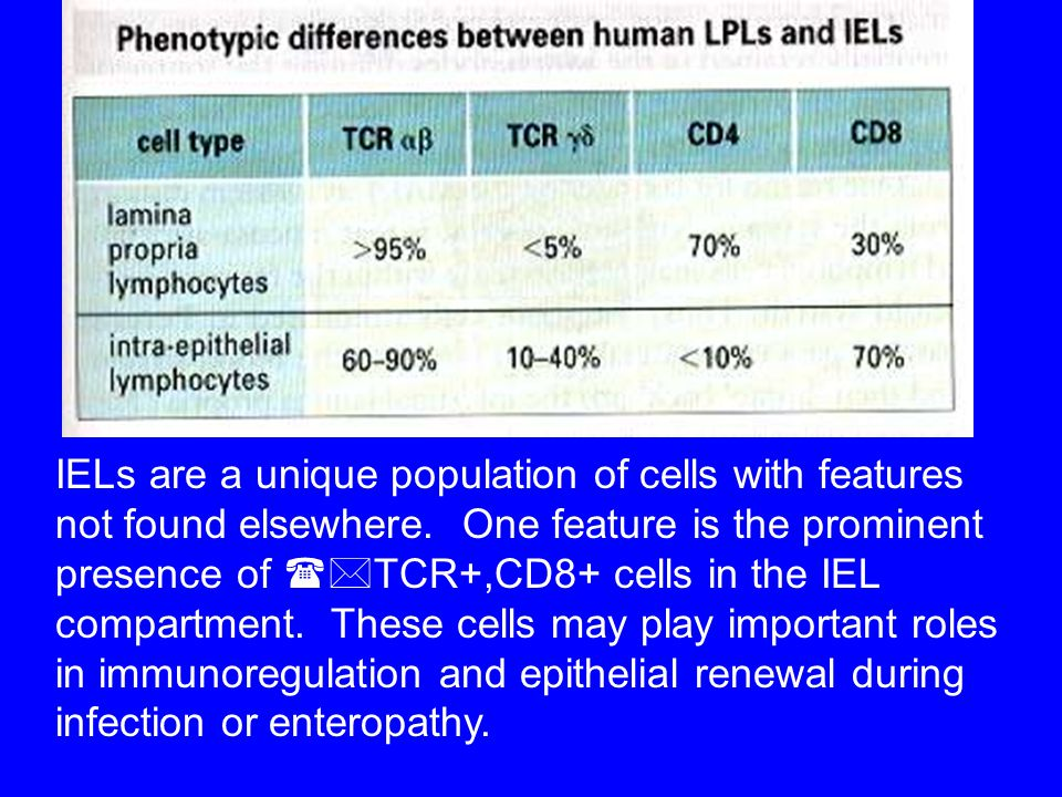 IELs are a unique population of cells with features not found elsewhere.