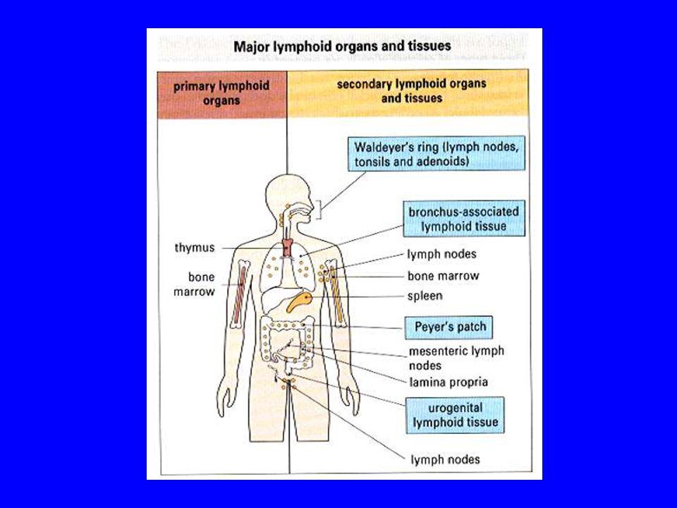 Mucosa-associated lymphoid tissue (MALT) Examples: - Nasal-associated lymphoid tissue (NALT).