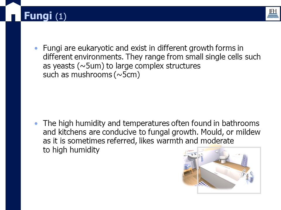 Fungi (1) Fungi are eukaryotic and exist in different growth forms in different environments. They range from small single cells such as yeasts (~5um)