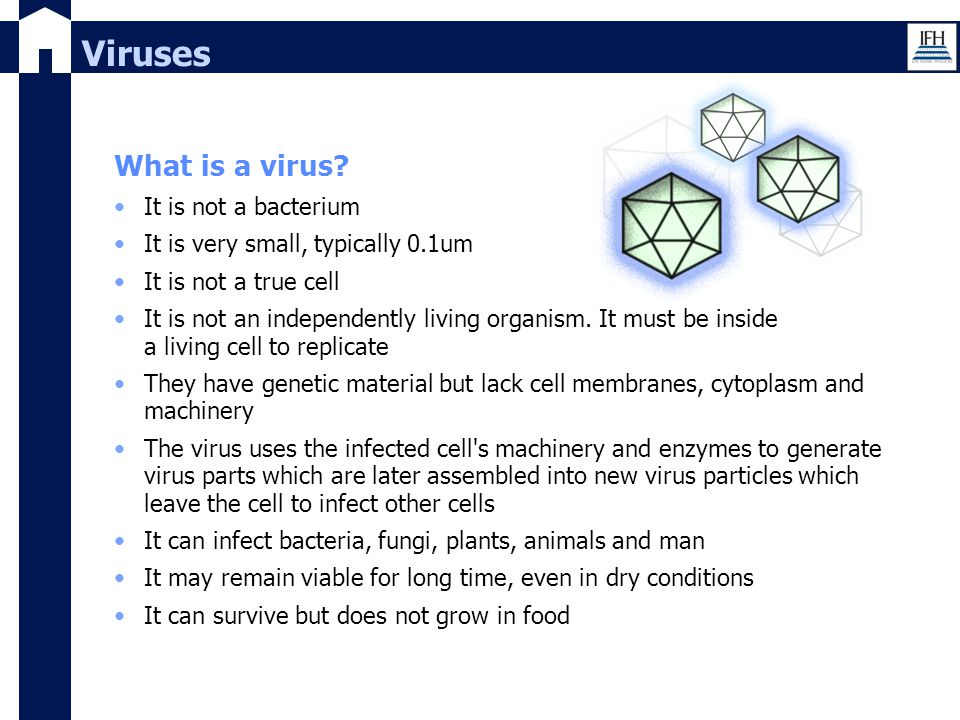 Viruses What is a virus? It is not a bacterium It is very small, typically 0.1um It is not a true cell It is not an independently living organism. It