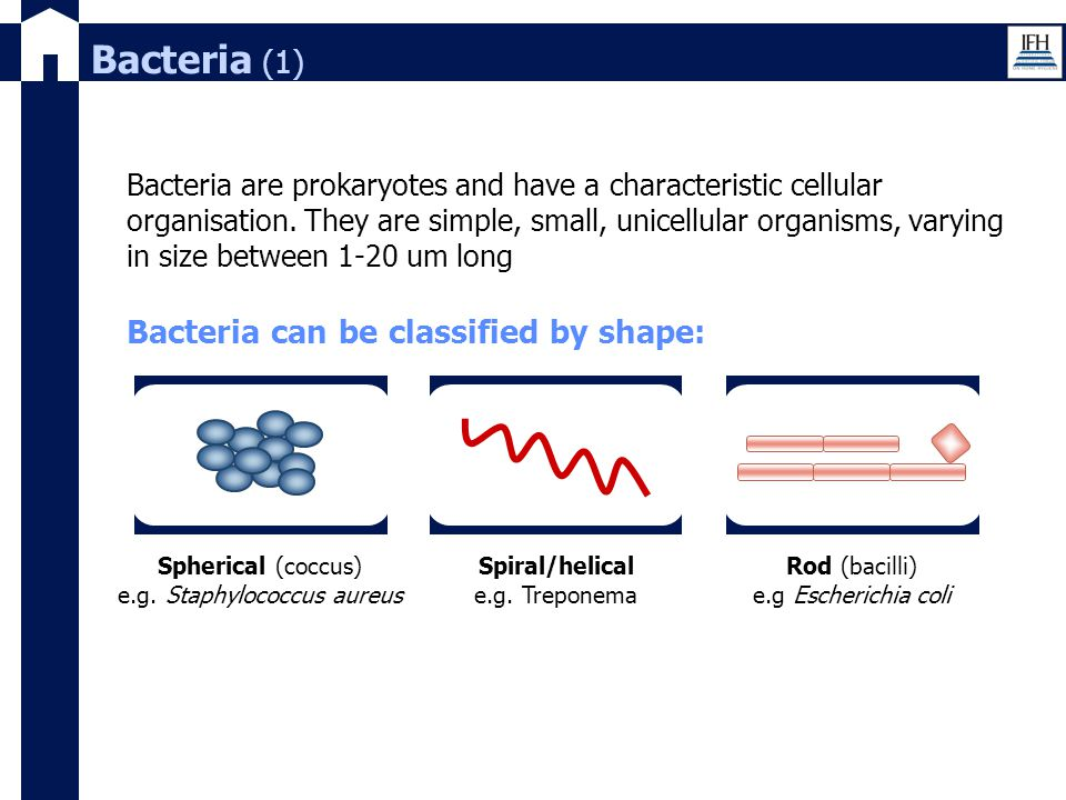 Bacteria (1) Bacteria are prokaryotes and have a characteristic cellular organisation. They are simple, small, unicellular organisms, varying in size