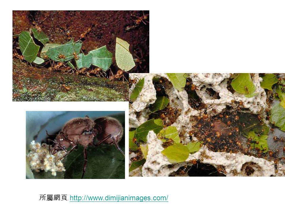 所屬網頁 http://www.dimijianimages.com/http://www.dimijianimages.com/