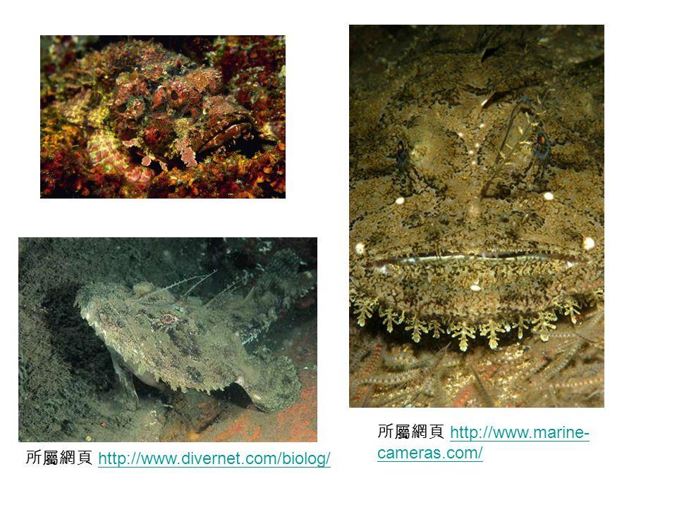 所屬網頁 http://www.divernet.com/biolog/http://www.divernet.com/biolog/ 所屬網頁 http://www.marine- cameras.com/http://www.marine- cameras.com/