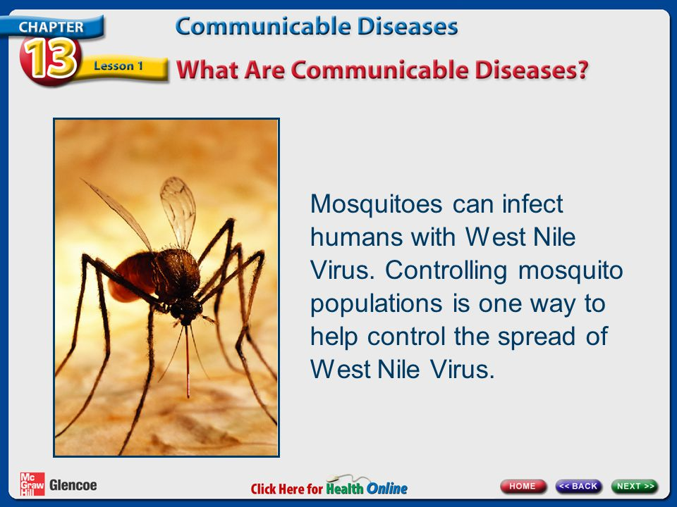 Mosquitoes can infect humans with West Nile Virus. Controlling mosquito populations is one way to help control the spread of West Nile Virus.