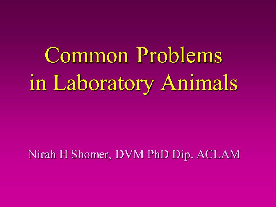 Common Problems in Laboratory Animals Nirah H Shomer, DVM PhD Dip. ACLAM