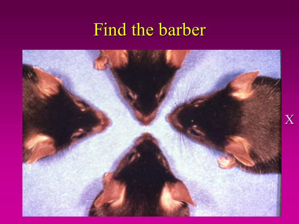 Find the barber X