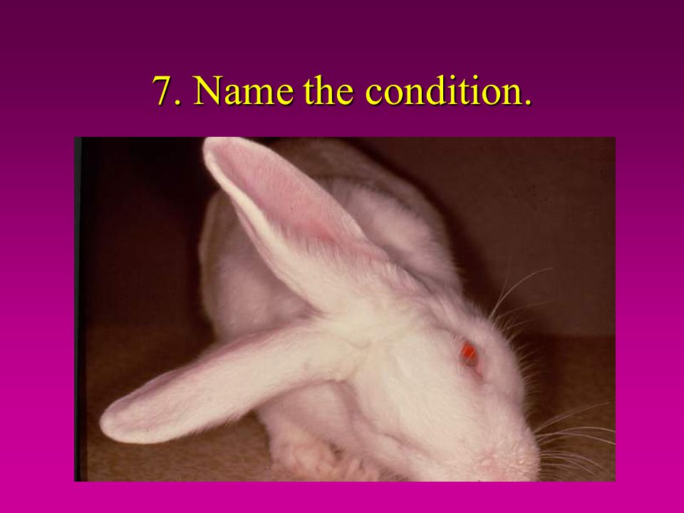 7. Name the condition.