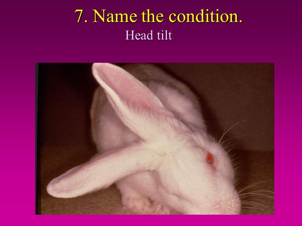 7. Name the condition. Head tilt