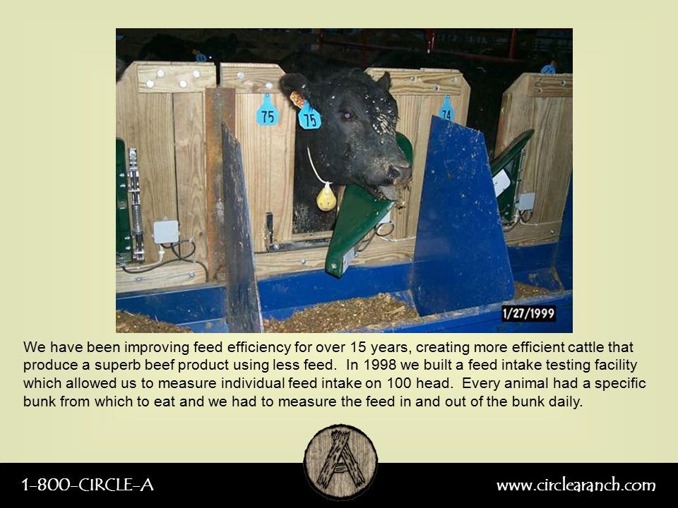 1-800-CIRCLE-Awww.circlearanch.com We have been improving feed efficiency for over 15 years, creating more efficient cattle that produce a superb beef product using less feed.