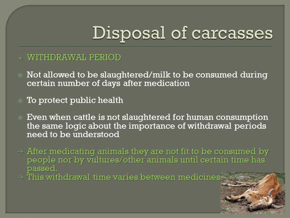  WITHDRAWAL PERIOD  Not allowed to be slaughtered/milk to be consumed during certain number of days after medication  To protect public health  Even when cattle is not slaughtered for human consumption the same logic about the importance of withdrawal periods need to be understood  After medicating animals they are not fit to be consumed by people nor by vultures/other animals until certain time has passed.