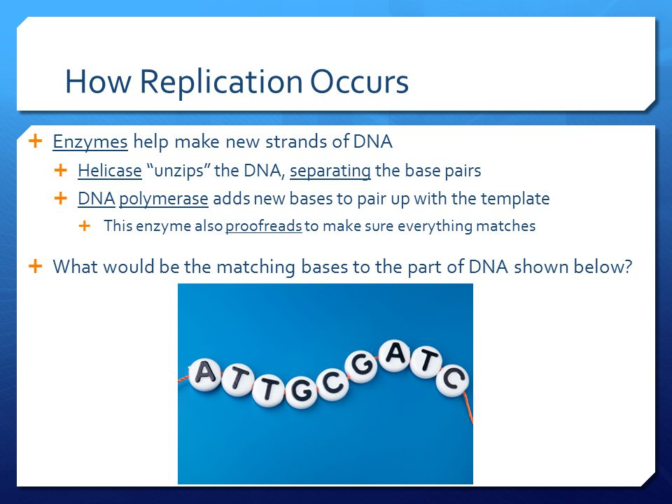 """How Replication Occurs  Enzymes help make new strands of DNA  Helicase """"unzips"""" the DNA, separating the base pairs  DNA polymerase adds new bases t"""