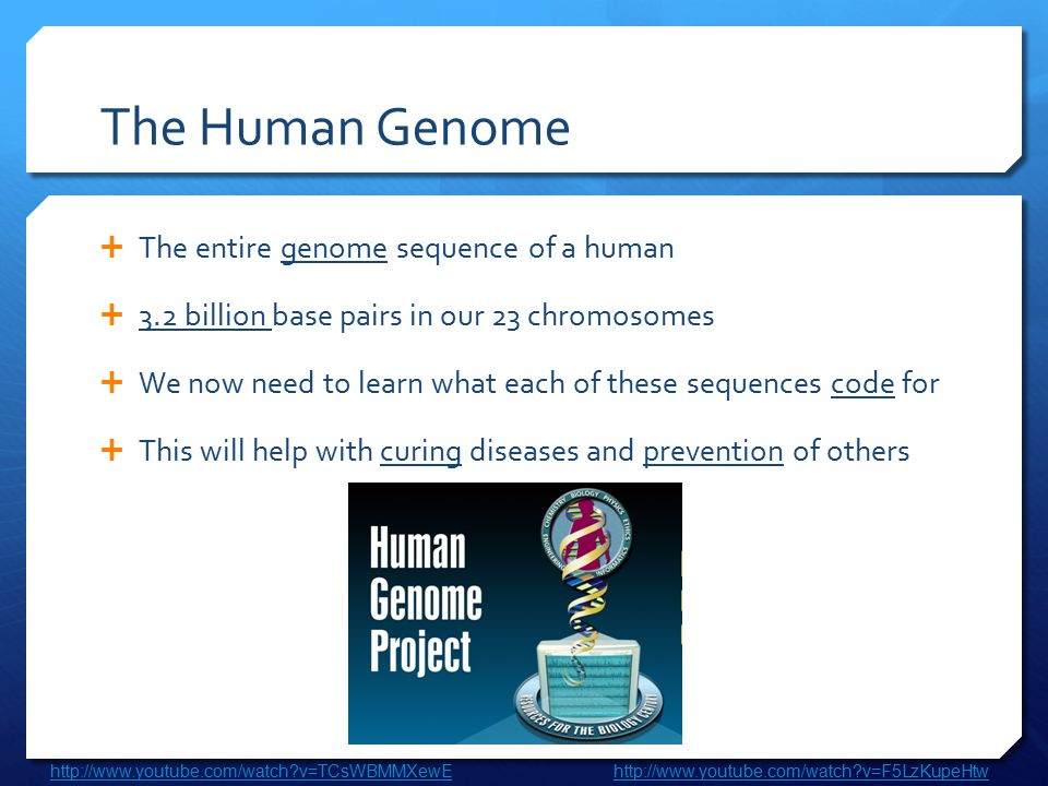 The Human Genome  The entire genome sequence of a human  3.2 billion base pairs in our 23 chromosomes  We now need to learn what each of these sequ
