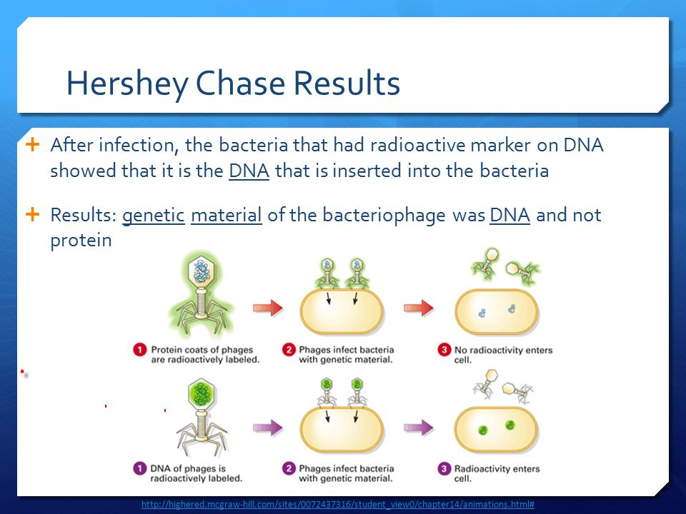 Hershey Chase Results  After infection, the bacteria that had radioactive marker on DNA showed that it is the DNA that is inserted into the bacteria