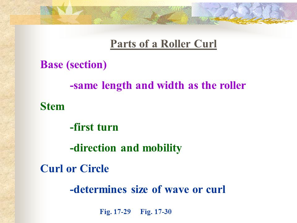 Parts of a Roller Curl Base (section) -same length and width as the roller Stem -first turn -direction and mobility Curl or Circle -determines size of