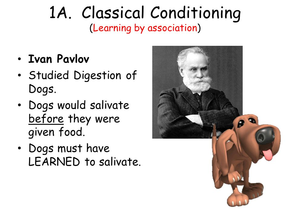 1A. Classical Conditioning (Learning by association) Ivan Pavlov Studied Digestion of Dogs. Dogs would salivate before they were given food. Dogs must