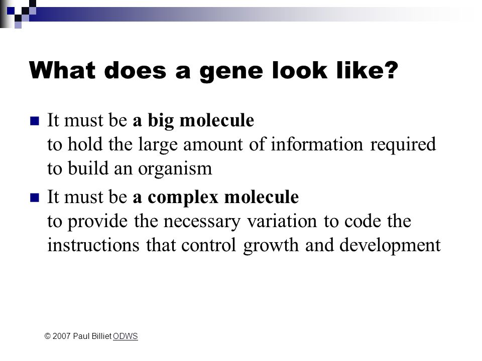 What does a gene look like.
