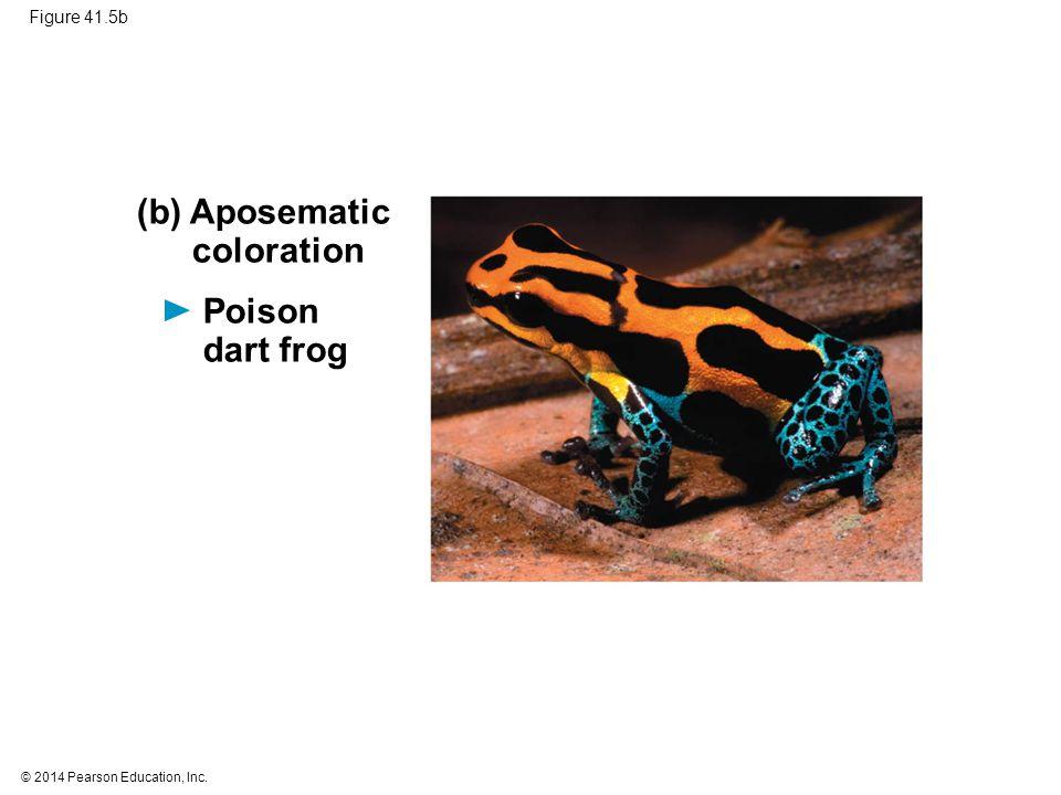 © 2014 Pearson Education, Inc. Figure 41.5b (b) Aposematic coloration Poison dart frog
