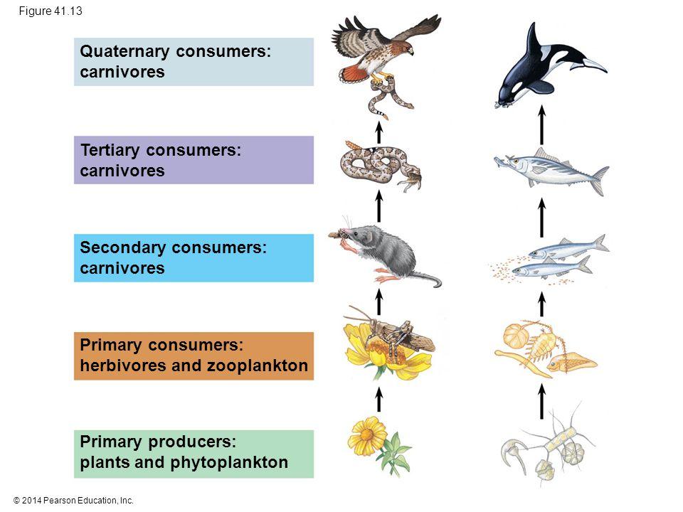 © 2014 Pearson Education, Inc. Figure 41.13 Quaternary consumers: carnivores Tertiary consumers: carnivores Secondary consumers: carnivores Primary co