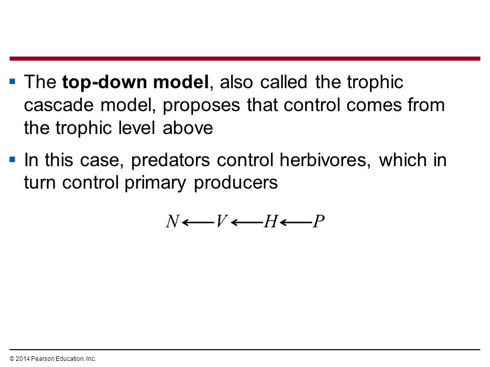 © 2014 Pearson Education, Inc.  The top-down model, also called the trophic cascade model, proposes that control comes from the trophic level above 