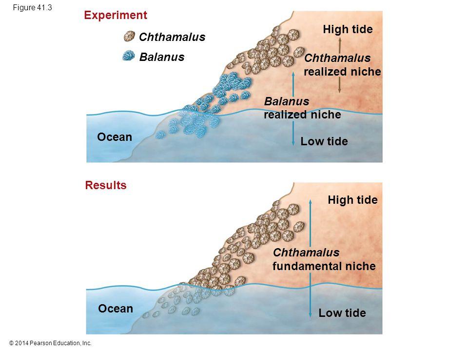 © 2014 Pearson Education, Inc. Figure 41.3 Ocean Chthamalus Low tide Experiment Low tide High tide Ocean Balanus realized niche Chthamalus realized ni