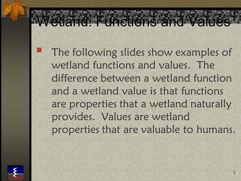 22 Food Wetlands produce food that is beneficial to humans. Examples are rice and cranberries