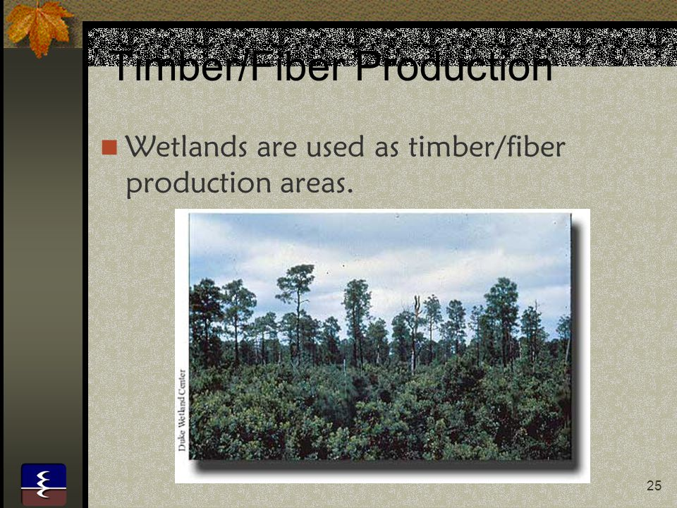25 Timber/Fiber Production Wetlands are used as timber/fiber production areas.