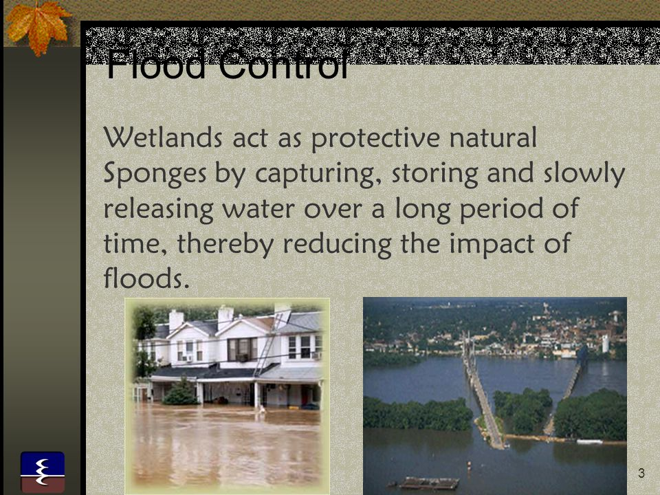 4 Coastal Protection Coastal marshes, mangrove swamps and other estuarine wetlands act as effective storm buffers.