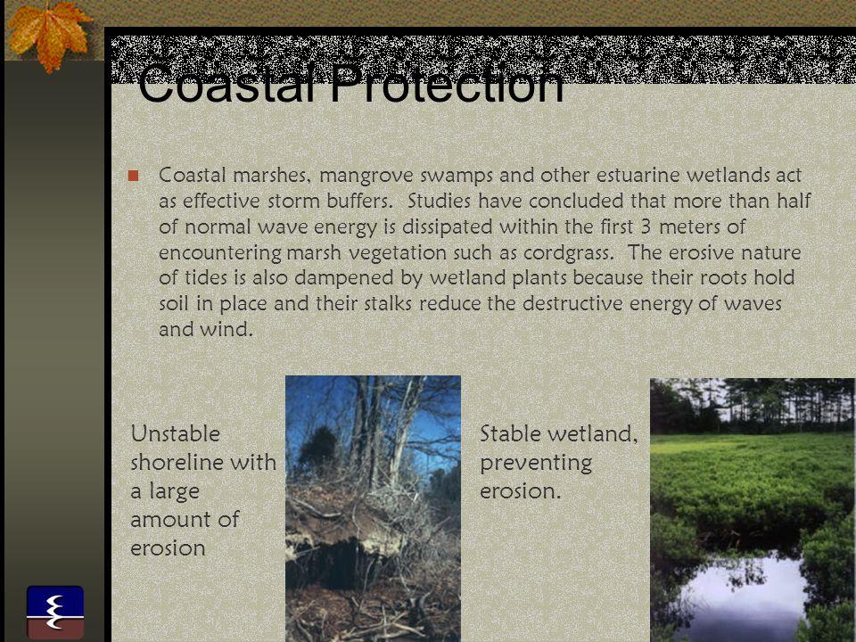 15 Wetland Function - Habitat Wetlands provide habitat for upland mammals such as deer and raccoons.