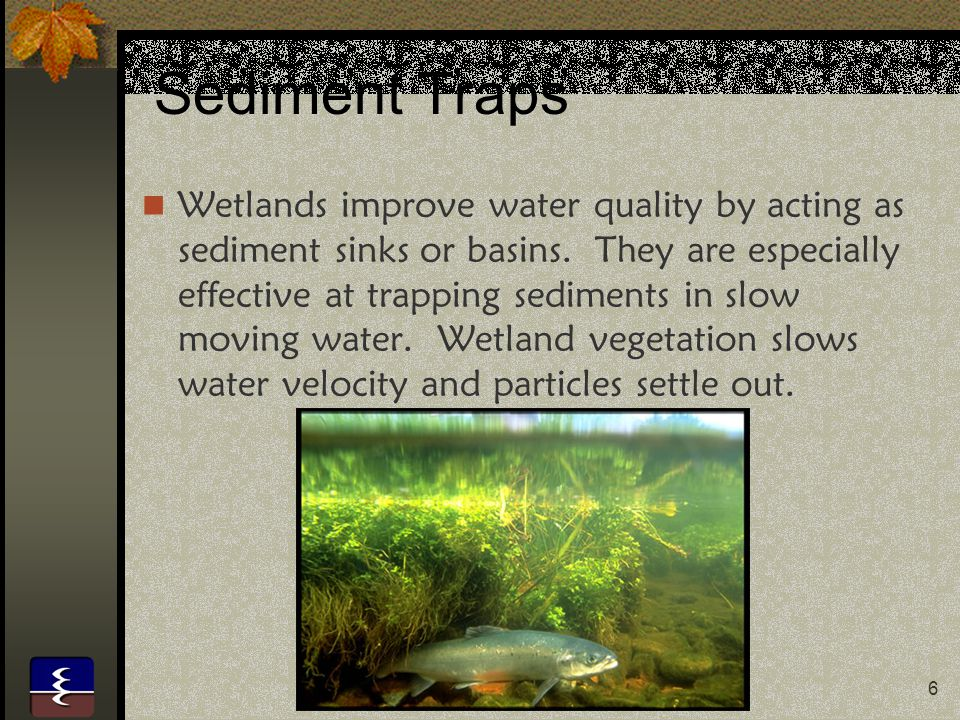 7 Atmospheric Equilibrium Atmospheric levels of carbon and sulfur and excess nitrogen contained in fertilizers are lowered by a wetlands' ability to capture and reduce these elements to harmless or inert forms.