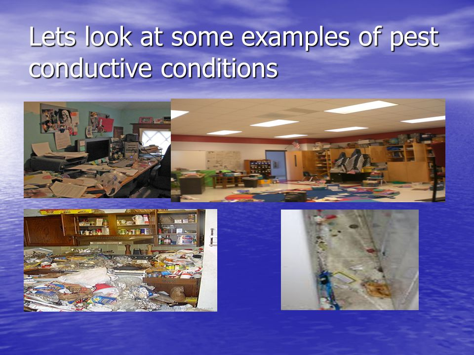 Lets look at some examples of pest conductive conditions