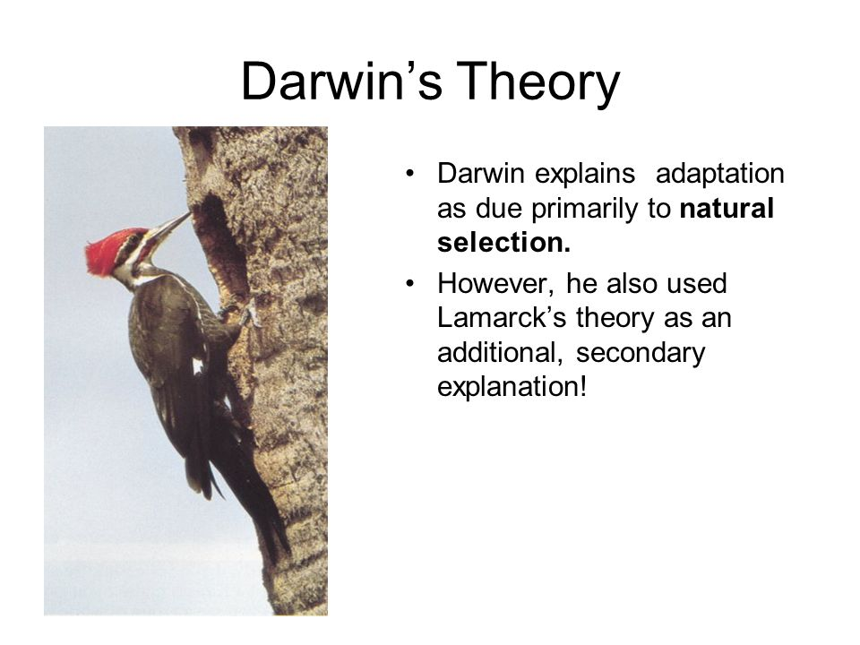 Darwin's Theory Darwin explains adaptation as due primarily to natural selection.