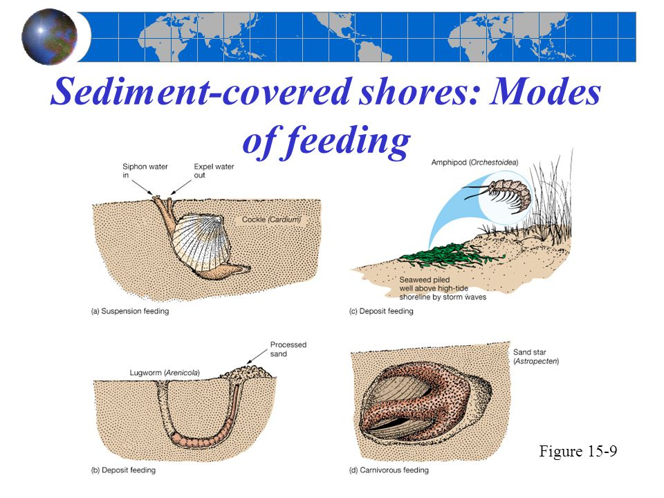 Food sources for deep-sea organisms Figure 15-22