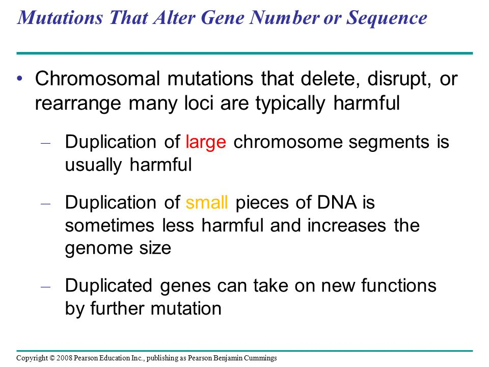 Copyright © 2008 Pearson Education Inc., publishing as Pearson Benjamin Cummings Mutations That Alter Gene Number or Sequence Chromosomal mutations that delete, disrupt, or rearrange many loci are typically harmful – Duplication of large chromosome segments is usually harmful – Duplication of small pieces of DNA is sometimes less harmful and increases the genome size – Duplicated genes can take on new functions by further mutation