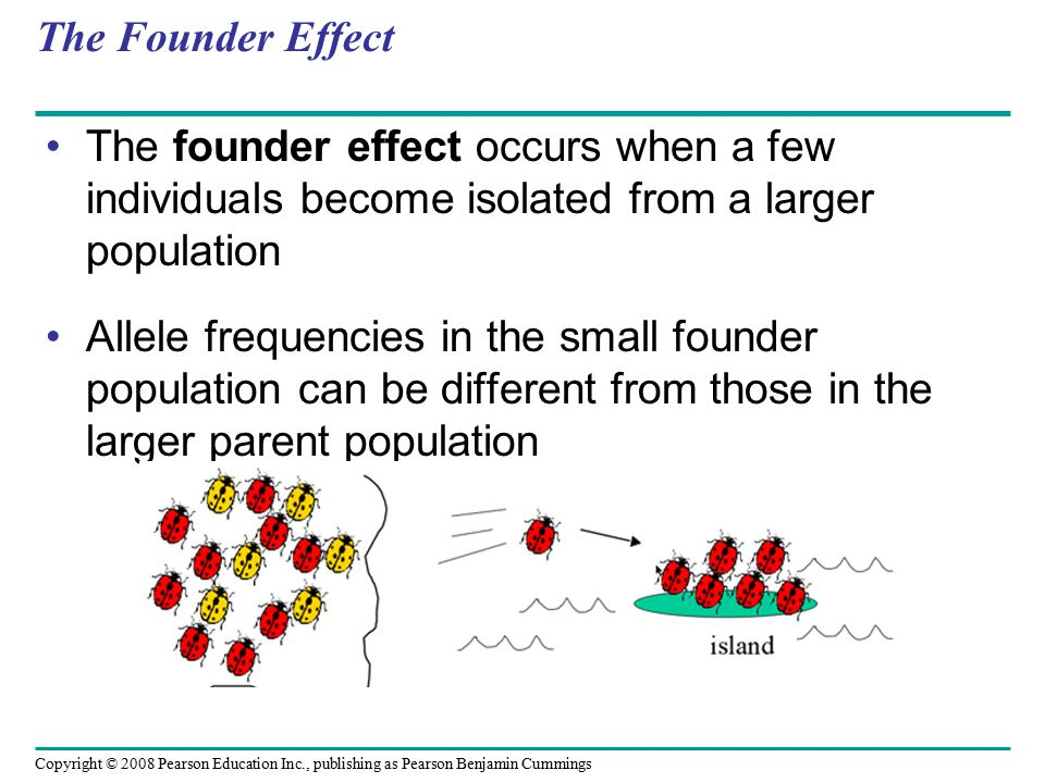 Copyright © 2008 Pearson Education Inc., publishing as Pearson Benjamin Cummings The Founder Effect The founder effect occurs when a few individuals become isolated from a larger population Allele frequencies in the small founder population can be different from those in the larger parent population