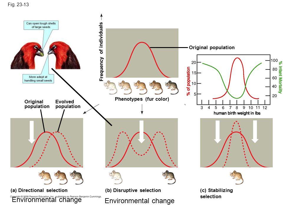 Fig. 23-13 Original population (c) Stabilizing selection (b) Disruptive selection (a) Directional selection Phenotypes (fur color) Frequency of indivi
