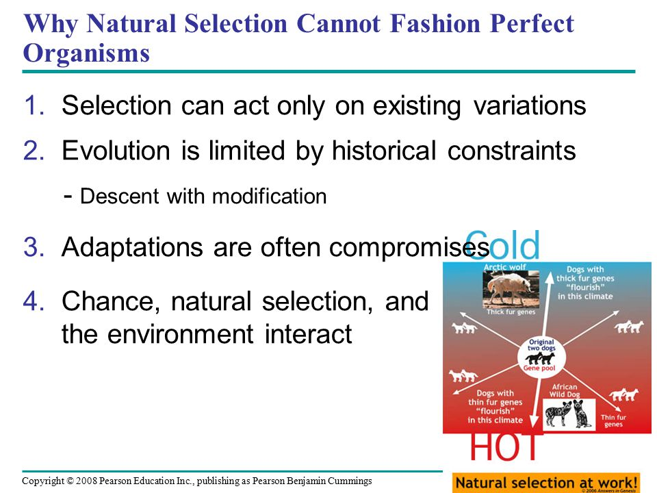 Copyright © 2008 Pearson Education Inc., publishing as Pearson Benjamin Cummings Why Natural Selection Cannot Fashion Perfect Organisms 1.Selection can act only on existing variations 2.Evolution is limited by historical constraints - Descent with modification 3.Adaptations are often compromises 4.Chance, natural selection, and the environment interact