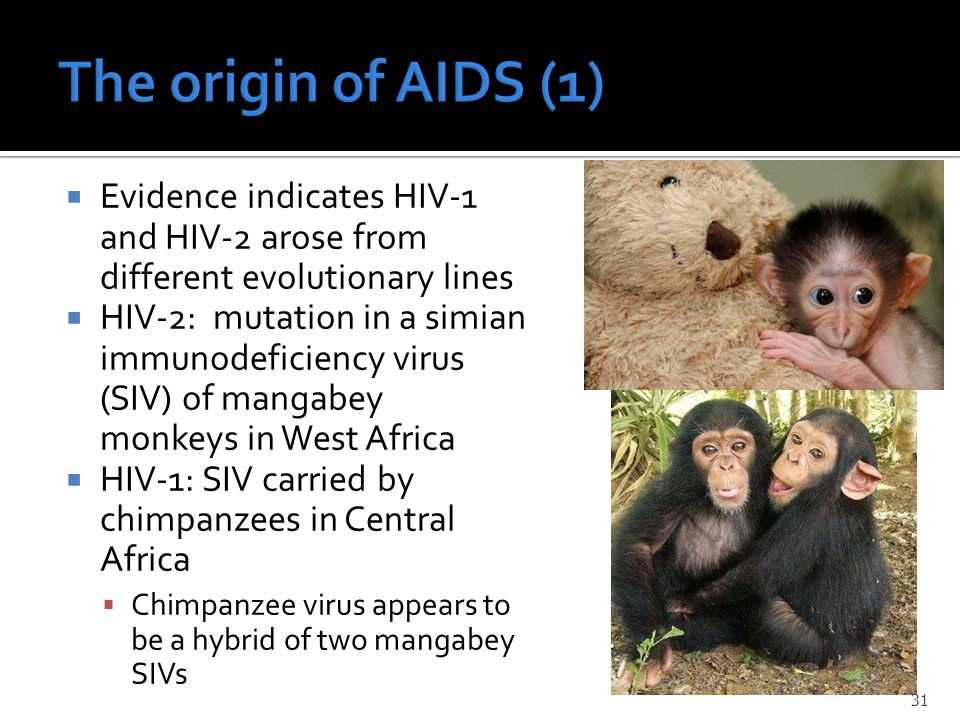  Evidence indicates HIV-1 and HIV-2 arose from different evolutionary lines  HIV-2: mutation in a simian immunodeficiency virus (SIV) of mangabey monkeys in West Africa  HIV-1: SIV carried by chimpanzees in Central Africa  Chimpanzee virus appears to be a hybrid of two mangabey SIVs 31