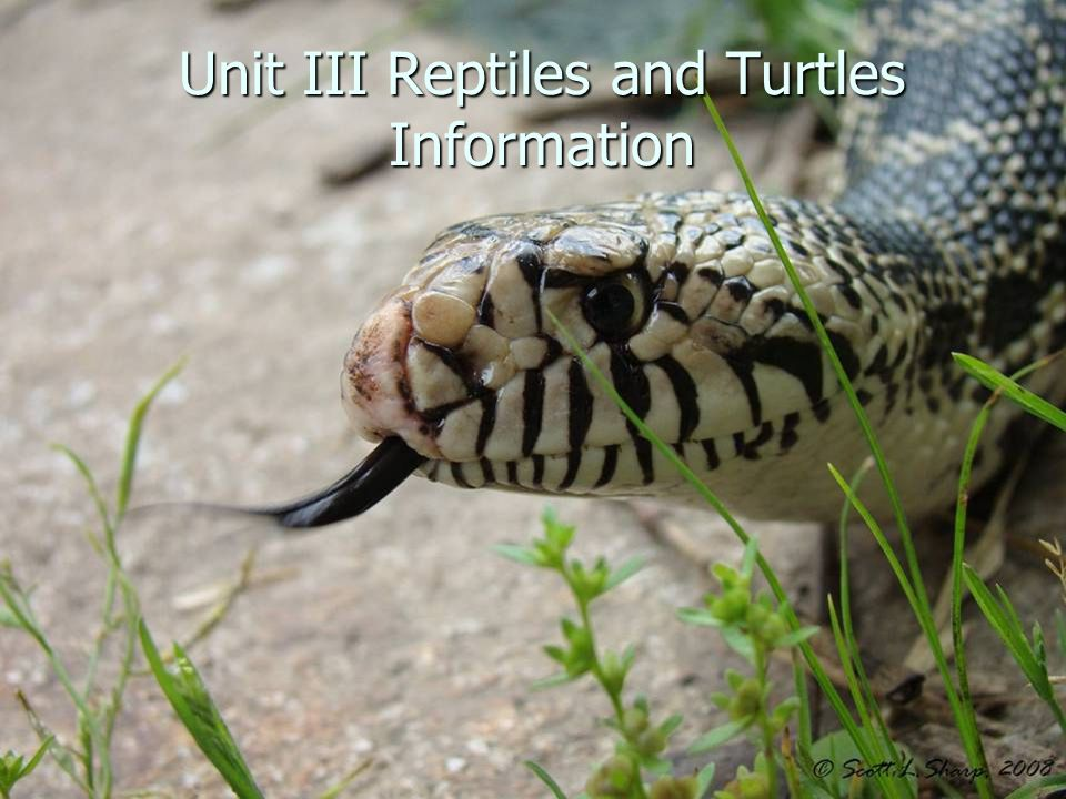 Unit III Reptiles and Turtles Information