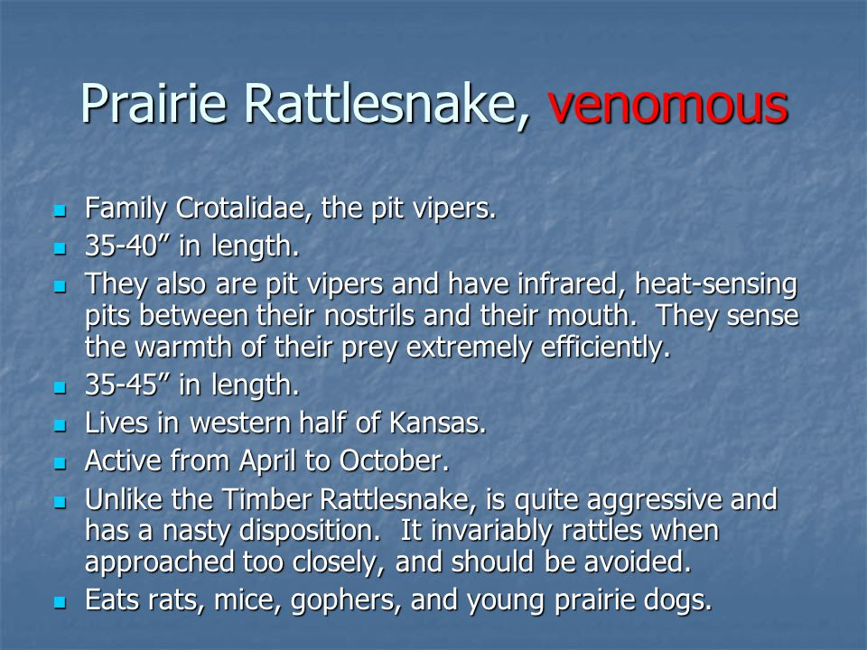 "Family Crotalidae, the pit vipers. Family Crotalidae, the pit vipers. 35-40"" in length. 35-40"" in length. They also are pit vipers and have infrared,"