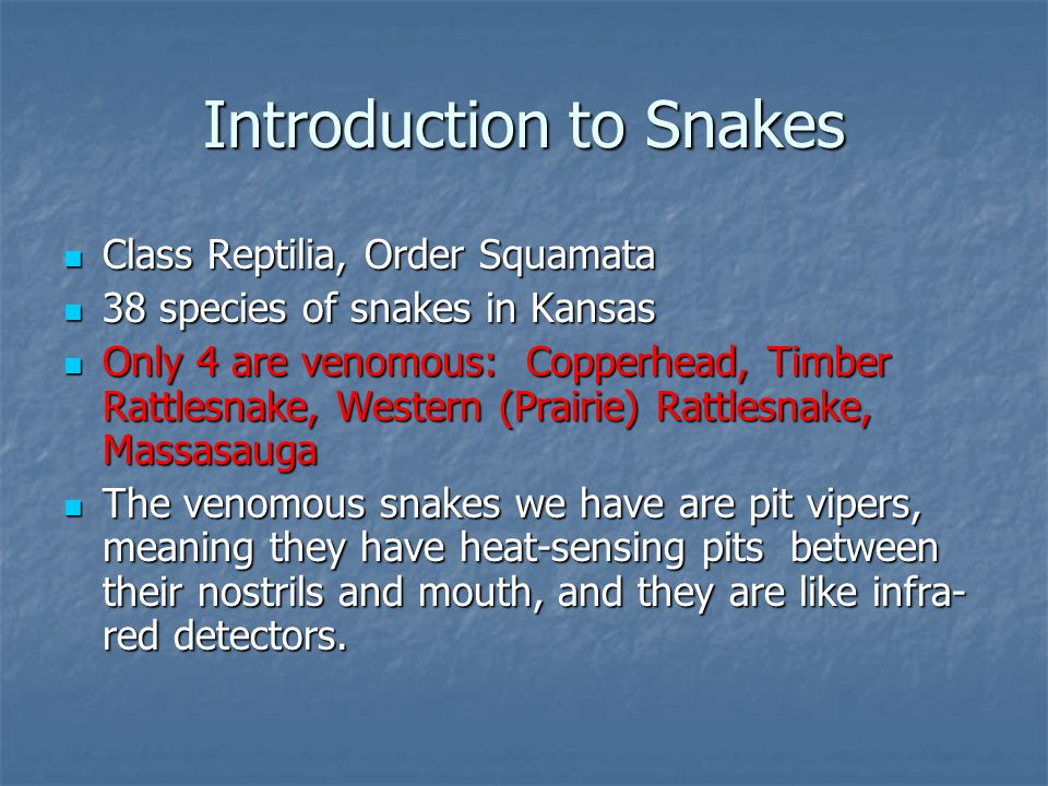 Introduction to Snakes Class Reptilia, Order Squamata Class Reptilia, Order Squamata 38 species of snakes in Kansas 38 species of snakes in Kansas Only 4 are venomous: Copperhead, Timber Rattlesnake, Western (Prairie) Rattlesnake, Massasauga Only 4 are venomous: Copperhead, Timber Rattlesnake, Western (Prairie) Rattlesnake, Massasauga The venomous snakes we have are pit vipers, meaning they have heat-sensing pits between their nostrils and mouth, and they are like infra- red detectors.