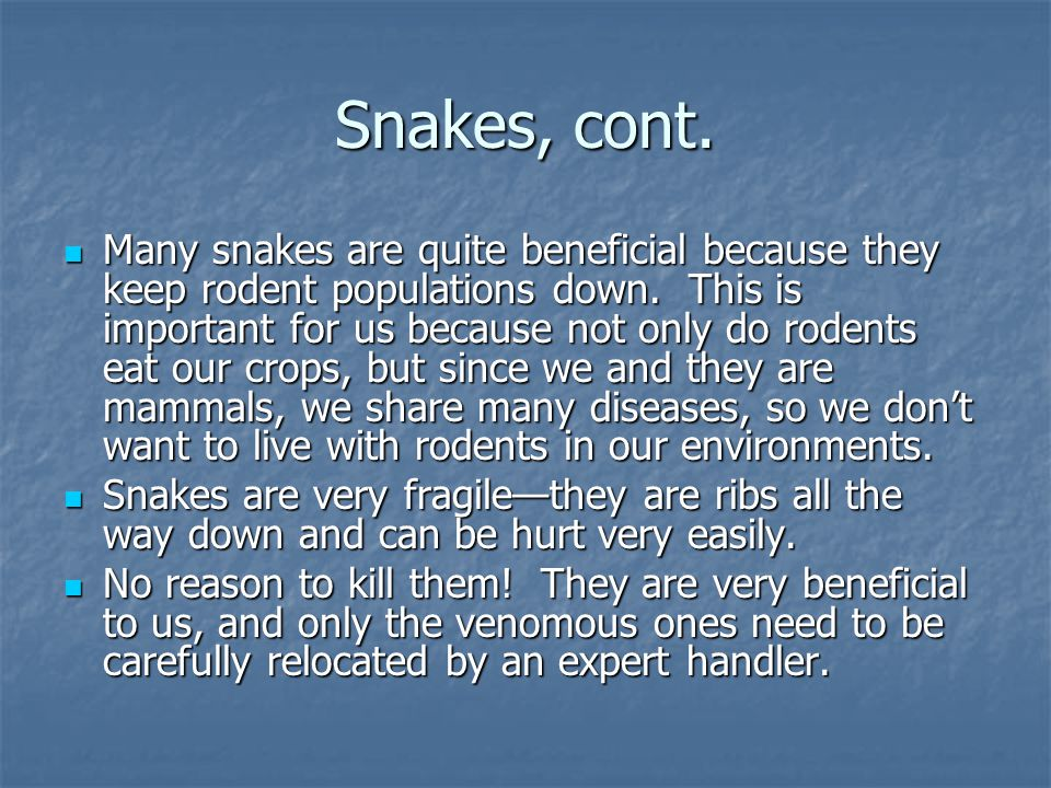 Snakes, cont. Many snakes are quite beneficial because they keep rodent populations down.