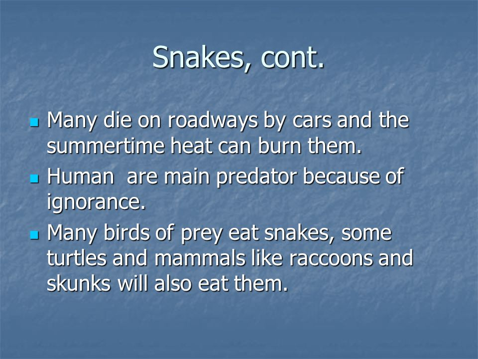 Snakes, cont. Many die on roadways by cars and the summertime heat can burn them.
