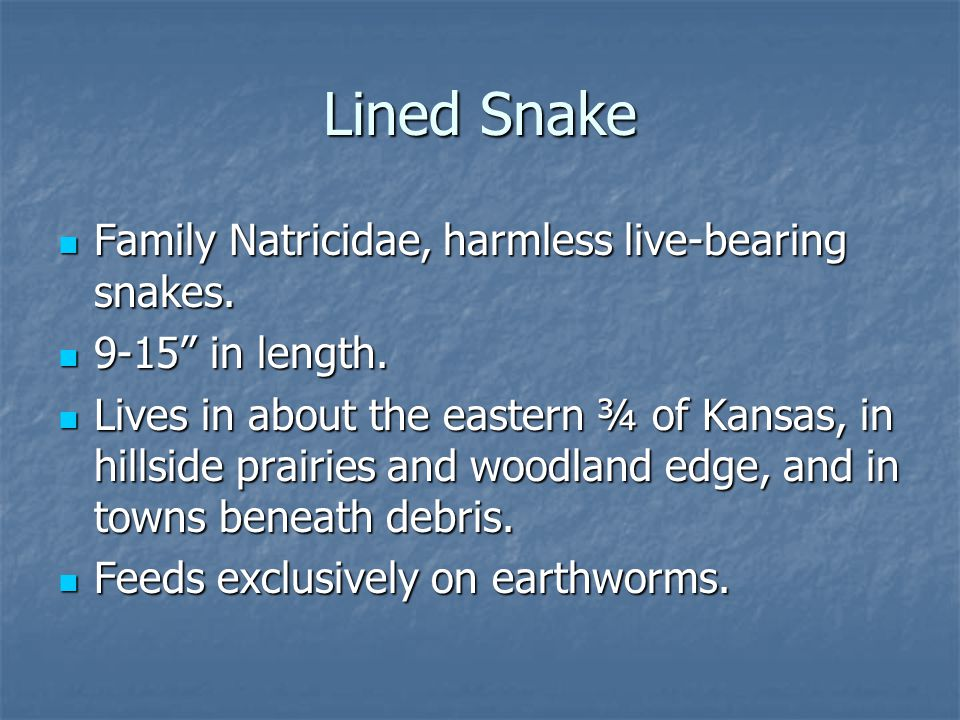 "Family Natricidae, harmless live-bearing snakes. Family Natricidae, harmless live-bearing snakes. 9-15"" in length. 9-15"" in length. Lives in about the"